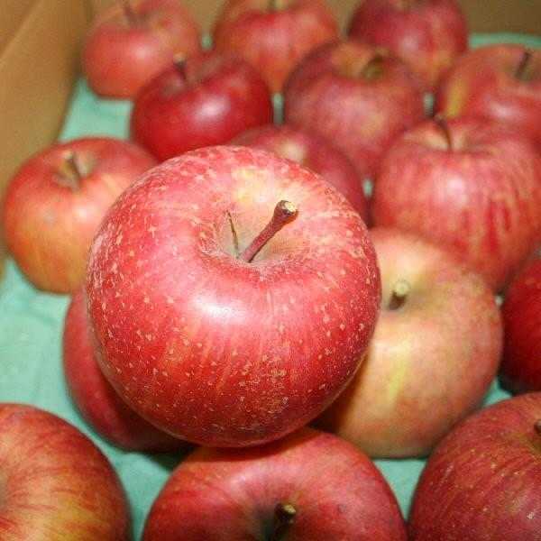 フルーツ りんご サンふじ Cランク 家庭用 約5kg 訳あり 12玉〜18玉 長野県産 リンゴ CA貯蔵  糖度13度以上 送料無料  [クール便]|marutomi-s|02