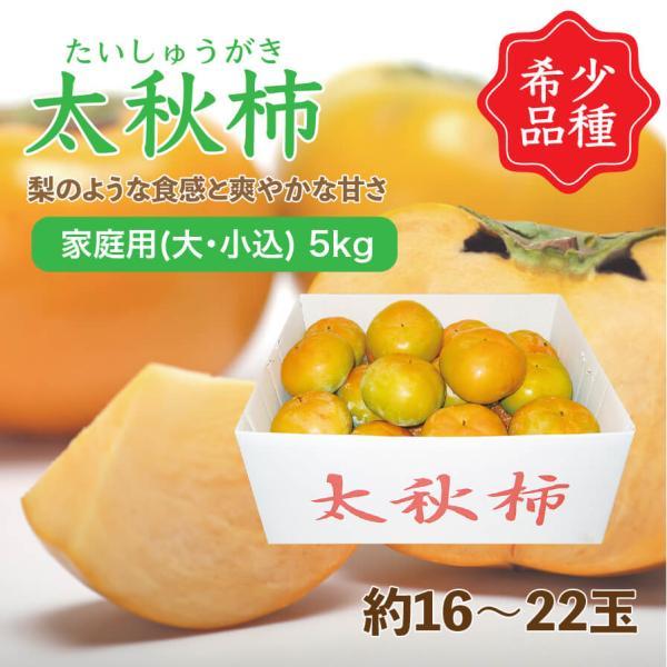 太秋柿 たいしゅうがき 愛媛県産 柿 家庭用 大・小込み 5kg 約16~22玉