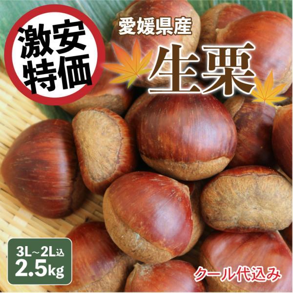 生栗 愛媛県産 栗 皮付き 3L~2L込 3kg クール便代金込