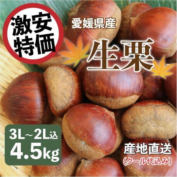 生栗 愛媛県産 栗 皮付き 3L~2L込 5kg クール便代金込