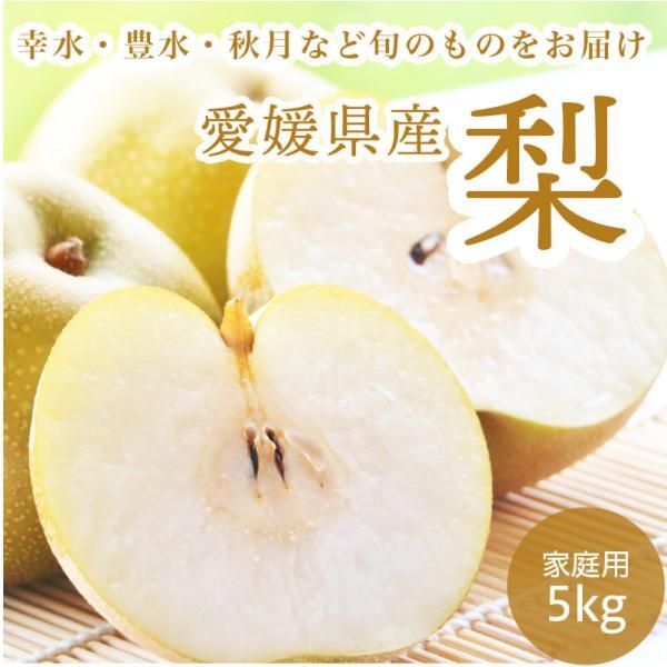 梨 ナシ 愛媛県産 幸水 豊水 5kg 約12~18玉
