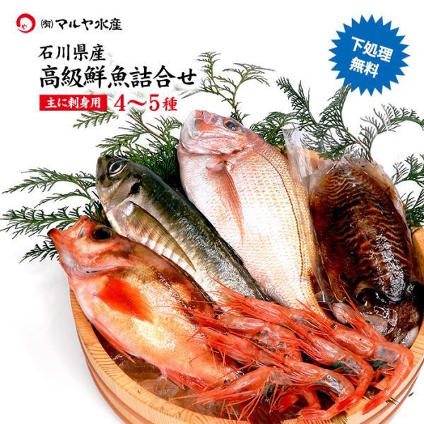 期間限定 (石川県産) 四季の魚を直送!旬の獲れたて高級鮮魚 4〜5種類詰め合わせ (主にお刺身用・下処理済み) maruya