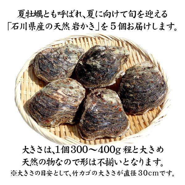 [石川県産]素潜り漁の天然物 殻付き岩牡蠣 [生食用:岩カキ] ×5個(1個300〜400g) maruya 02