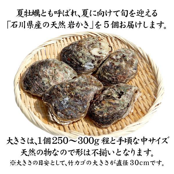 [石川県産]素潜り漁の天然物 殻付き岩牡蠣 [生食用:岩カキ] ×5個(1個250〜300g)|maruya|02