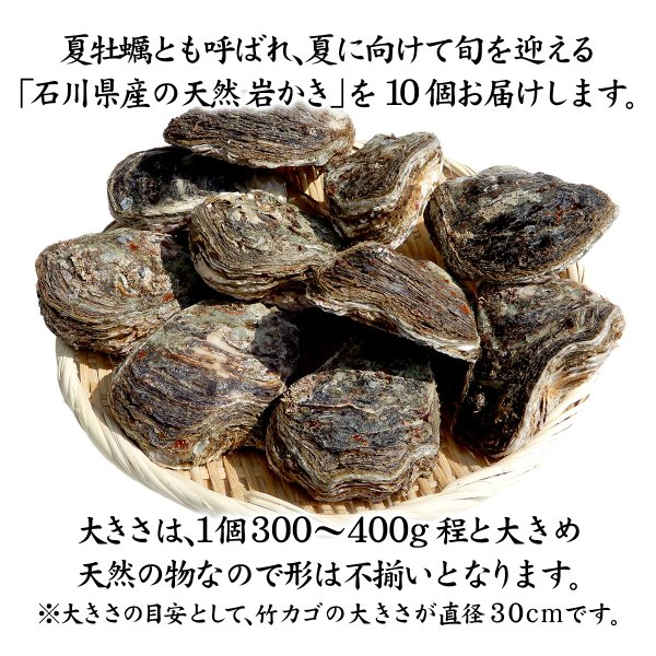 [石川県産]素潜り漁の天然物 殻付き岩牡蠣 [生食用:岩カキ] ×10個(1個300〜400g)|maruya|02