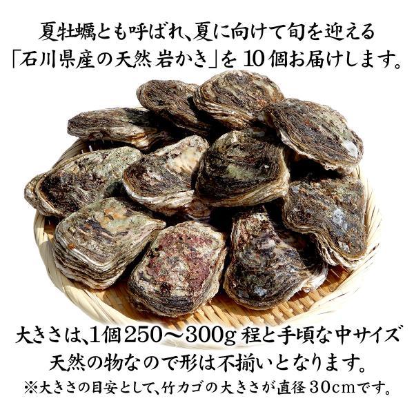 [石川県産]素潜り漁の天然物 殻付き岩牡蠣 [生食用:岩カキ] ×10個(1個250〜300g) maruya 02