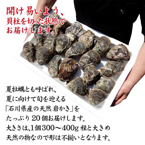 [石川県産]素潜り漁の天然物 殻付き岩牡蠣 [生食用:岩ガキ] ×20個(1個300〜400g/殻を開け易い様にしてお届け)|maruya|02