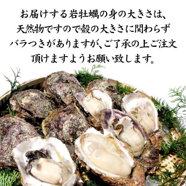 [石川県産]素潜り漁の天然物 殻付き岩牡蠣 [生食用:岩ガキ] ×20個(1個300〜400g/殻を開け易い様にしてお届け)|maruya|05