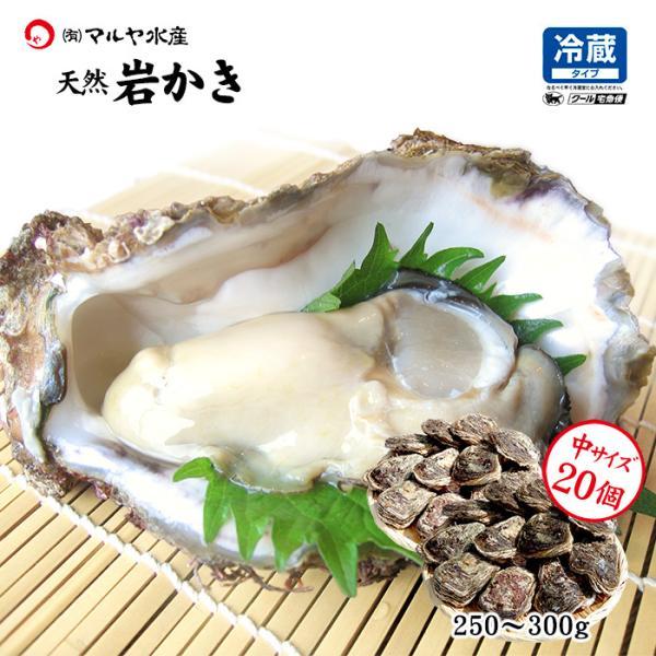 [石川県産]素潜り漁の天然物 殻付き岩牡蠣 [生食用:岩ガキ] ×20個(1個250〜300g/殻を開け易い様にしてお届け)|maruya