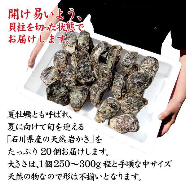 [石川県産]素潜り漁の天然物 殻付き岩牡蠣 [生食用:岩ガキ] ×20個(1個250〜300g/殻を開け易い様にしてお届け)|maruya|02