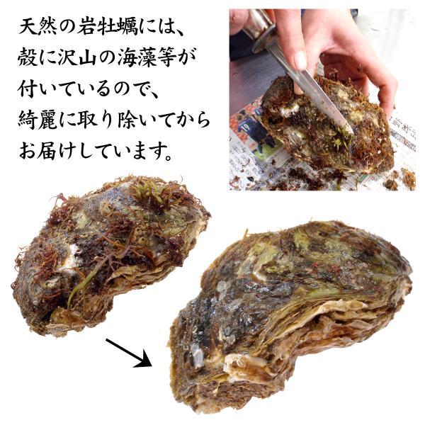 [石川県産]素潜り漁の天然物 殻付き岩牡蠣 [生食用:岩ガキ] ×20個(1個250〜300g/殻を開け易い様にしてお届け)|maruya|06
