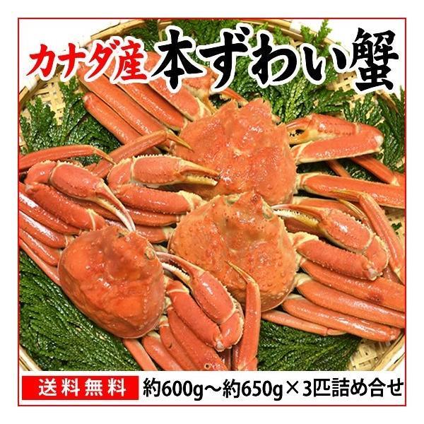 本ずわい蟹:約600g〜約650g×3匹 詰め合せ|maruya