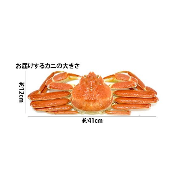 本ずわい蟹:約750g〜約800g×2匹 詰め合せ|maruya|05