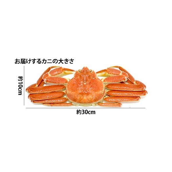 本ずわい蟹:約500g〜約550g×3匹 詰め合せ|maruya|05