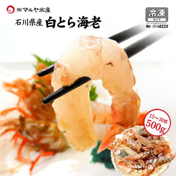 (石川県産)宝勝丸水揚げ 白がすえび(白とらえび):20〜30匹入 500g|maruya