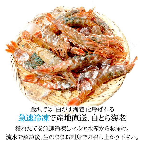 (石川県産)宝勝丸水揚げ 白がすえび(白とらえび):20〜30匹入 500g|maruya|02