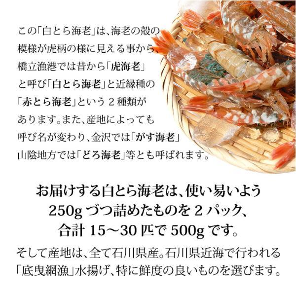 (石川県産)宝勝丸水揚げ 白がすえび(白とらえび):20〜30匹入 500g|maruya|03