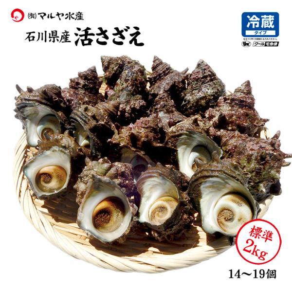 [石川県産]素潜り漁の活さざえ:中サイズ20個 詰合せ (1個100〜130g)|maruya