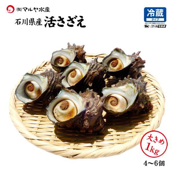 [石川県産]素潜り漁の活さざえ:大きめ 10個  詰合せ(1個130〜150g)|maruya