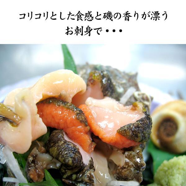 [石川県産]素潜り漁の活さざえ:大きめ 10個  詰合せ(1個130〜150g)|maruya|04