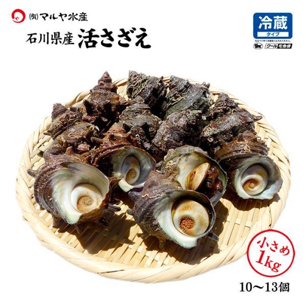 [石川県産]素潜り漁の活さざえ:小さめ 10個 詰合せ (1個80〜100g)|maruya