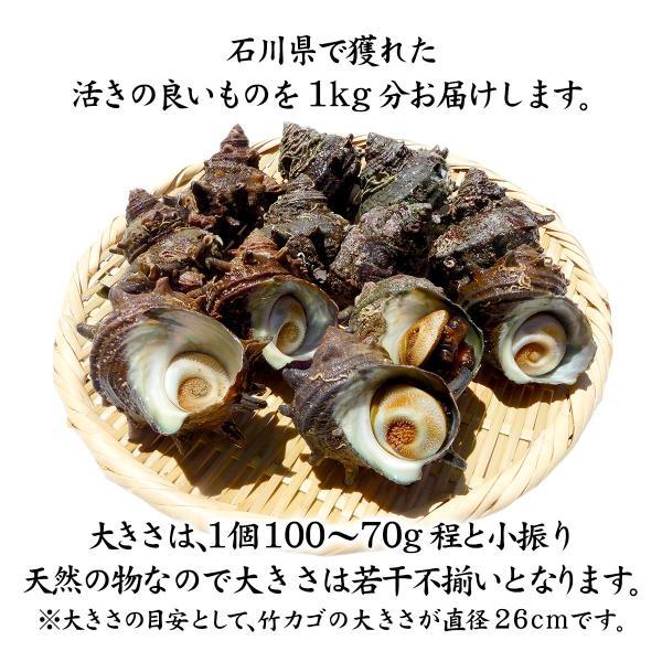 [石川県産]素潜り漁の活さざえ:小さめ 10個 詰合せ (1個80〜100g)|maruya|02