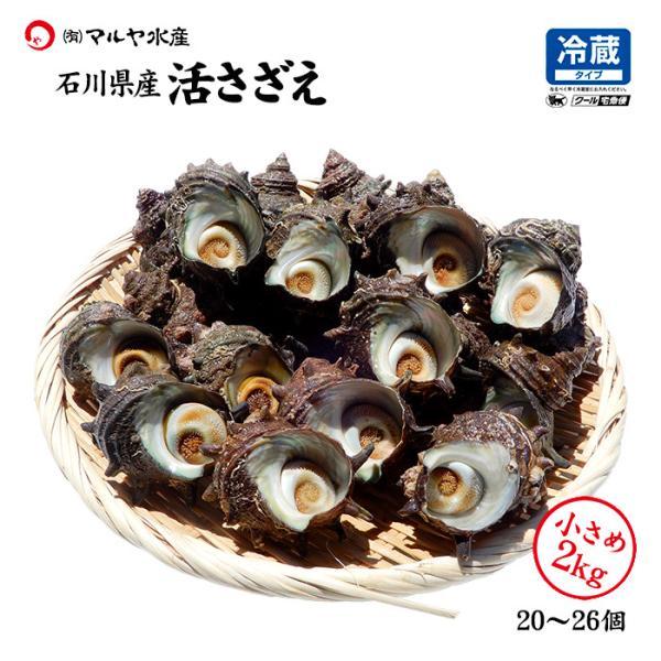 [石川県産]素潜り漁の活さざえ:小さめ 20個 詰合せ (1個80〜100g)|maruya