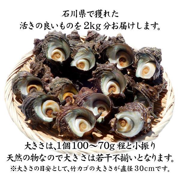 [石川県産]素潜り漁の活さざえ:小さめ 20個 詰合せ (1個80〜100g)|maruya|02