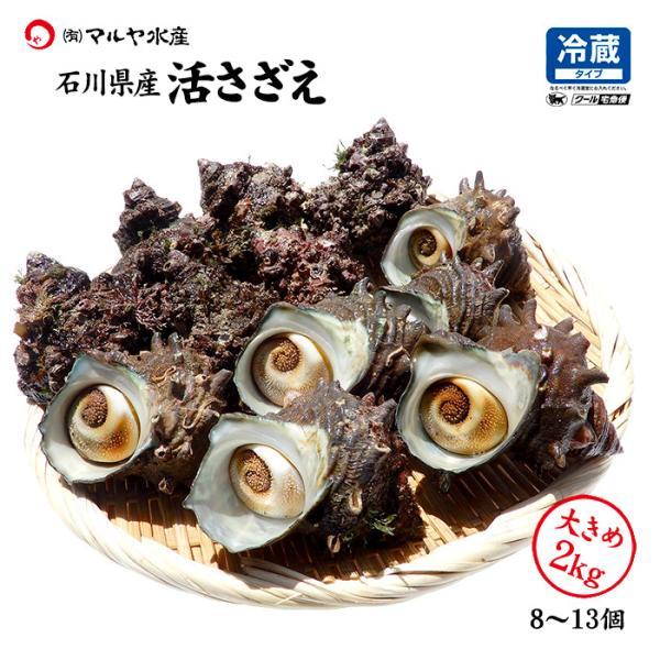 [石川県産]素潜り漁の活さざえ:大きめ 20個  詰合せ(1個130〜150g)|maruya