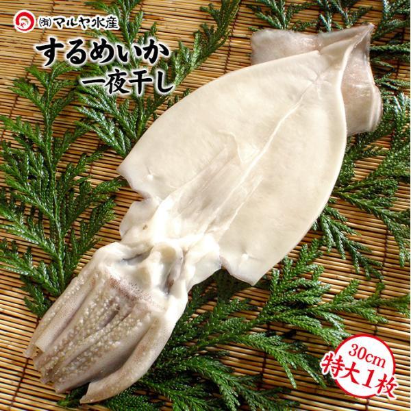 するめいか干物/一夜干し(石川県産小木漁港水揚げ1本凍結船凍いか使用)特大30cm以上×1枚