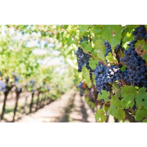 カルパンテ カニュラリ イゾラ デイ ヌラーギ 2016 カニュラーリ 100%  イタリア サルデーニャ 赤ワイン 750ml marwell 03