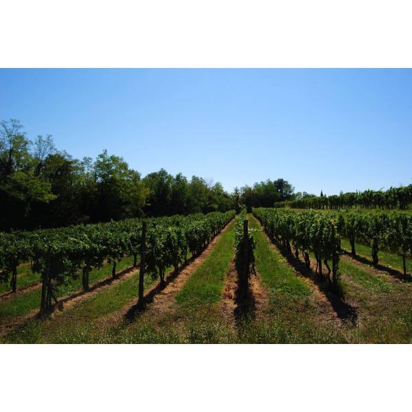 コルッタ ピニョーロ (最上級ライン) 2008・2012 ピニョーロ 100% フルボディ イタリア 赤ワイン 750ml|marwell|04