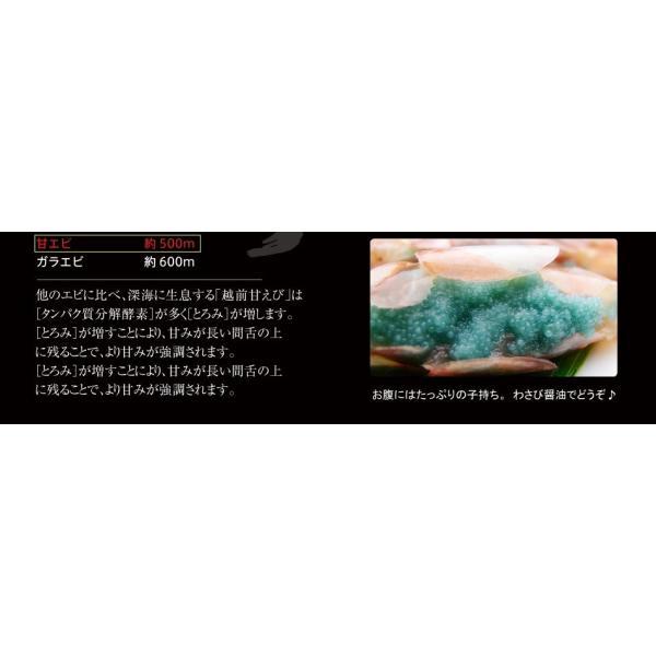 グルメ ギフト 福井県 特産 お刺身OK、無添加&船上冷凍の越前子持ち甘エビ生500g 冷凍便 送料無料|masuyone|11