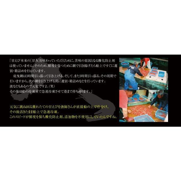 グルメ ギフト 福井県 特産 お刺身OK、無添加&船上冷凍の越前子持ち甘エビ生500g 冷凍便 送料無料|masuyone|09
