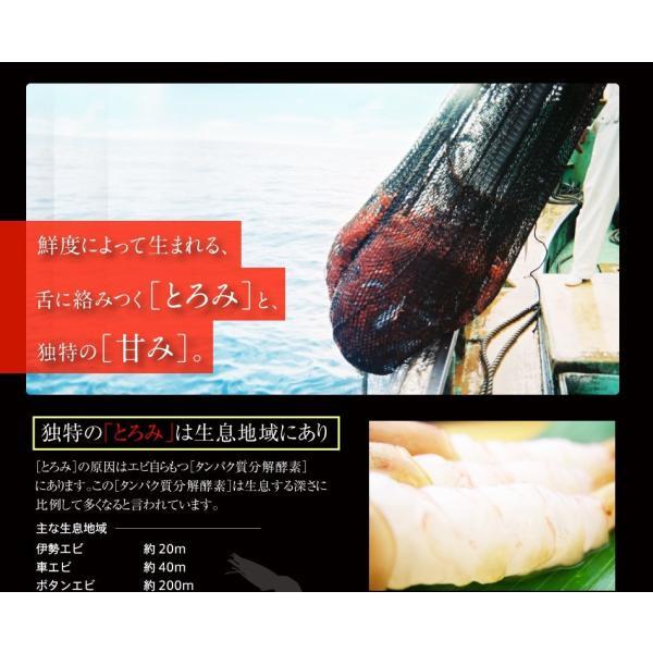 グルメ ギフト 福井県 特産 お刺身OK、無添加&船上冷凍の越前子持ち甘エビ生500g 冷凍便 送料無料|masuyone|10