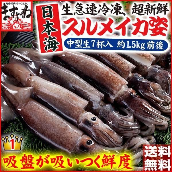 [生スルメイカ  烏賊] 解凍後に吸盤が吸いつく鮮度♪ 日本海産の生するめいか姿×7ハイ 約1.5kg[生/急速冷凍/冷凍便/送料無料]|masuyone