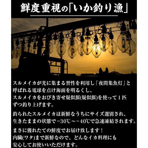 [生スルメイカ  烏賊] 解凍後に吸盤が吸いつく鮮度♪ 日本海産の生するめいか姿×7ハイ 約1.5kg[生/急速冷凍/冷凍便/送料無料]|masuyone|07