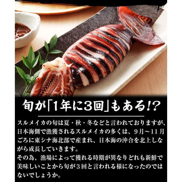 [生スルメイカ  烏賊] 解凍後に吸盤が吸いつく鮮度♪ 日本海産の生するめいか姿×7ハイ 約1.5kg[生/急速冷凍/冷凍便/送料無料]|masuyone|08