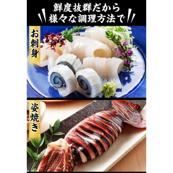 [生スルメイカ  烏賊] 解凍後に吸盤が吸いつく鮮度♪ 日本海産の生するめいか姿×7ハイ 約1.5kg[生/急速冷凍/冷凍便/送料無料]|masuyone|09