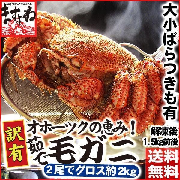カニ かに 毛ガニ 訳あり食品 大小バラつき有 オホーツク海産 特大茹で毛蟹 総重量2kg (解凍後1.5kg前後)  冷凍便 送料無料|masuyone