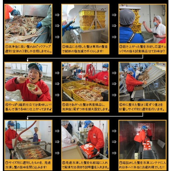 カニ かに ズワイ かに カニ 蟹 非再凍結で新鮮、訳なし本ずわい姿3kg(ボイル)600g×5 味噌みそ 冷凍便 送料無料|masuyone|12