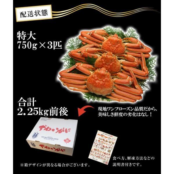カニ かに ズワイガニ 非再凍結ワンフロ ーズン鮮度 特大 本ずわい蟹 姿 約750gx3匹 2.25kg前後 味噌みそミソ 冷凍便 送料無料|masuyone|19