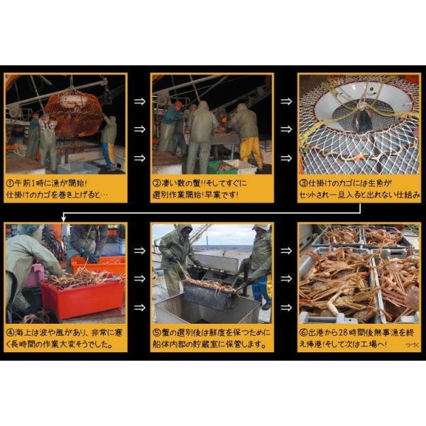 カニ かに ズワイガニ 非再凍結ワンフロ ーズン鮮度 特大 本ずわい蟹 姿 約750gx3匹 2.25kg前後 味噌みそミソ 冷凍便 送料無料|masuyone|05
