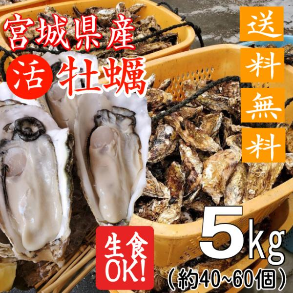 殻付き牡蠣 産地直送 宮城県産 5kg 生食用 送料無料 旬 活 かき 生ガキ|matsu-kaki