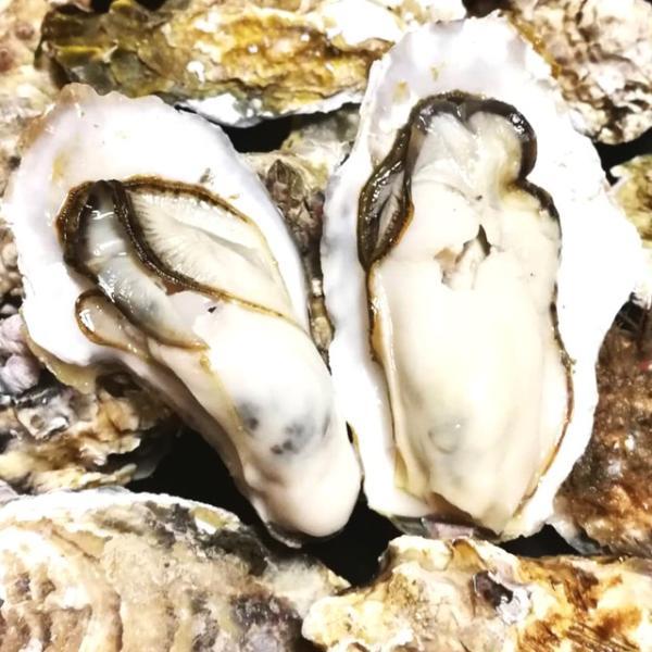 殻付き牡蠣 産地直送 宮城県産 5kg 生食用 送料無料 旬 活 かき 生ガキ|matsu-kaki|03