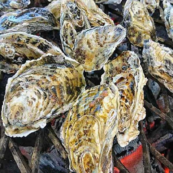 殻付き牡蠣 漁師直送 宮城県産 5kg 生食用 送料無料 旬 活 かき 生ガキ|matsu-kaki|06