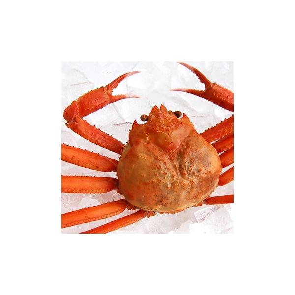 ボイル紅ずわいがに姿(冷凍)1尾 (浜坂産) (姿、紅ズワイガニ、紅がに、紅ガニ、蟹)
