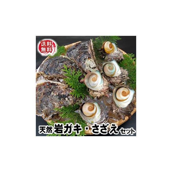 (送料無料)山陰の「岩がき・さざえ」天然もの詰合せセット(生食可)2セット以上のご注文でおまけ有♪  (岩牡蠣、岩かき、岩ガキ)