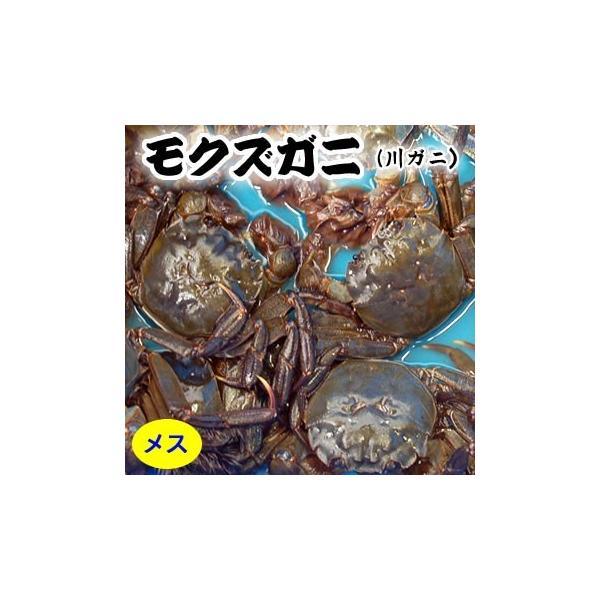 天然 モクズガニ(活生)メス 大 1尾 (兵庫県産)(ツガニ,ケガニ,ヤマタロウガニ)