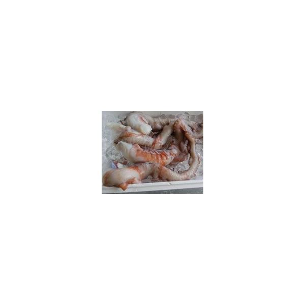 水たこ足(生冷凍) 1本 約400-490g程度 (浜坂産) タコ、ミズダコ